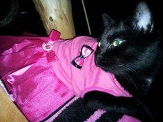 My Ballerina Cat- Yaxin