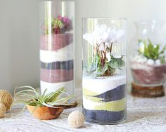 Make a sand art terrarium with blogger Stephanie Rose, author of Garden Made.