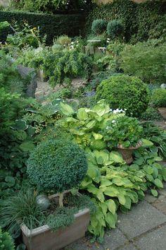 Stille dage i september. Partial Shade Plants, September, Baby, Baby Humor, Infant, Babies, Babys