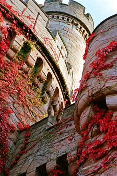 Ivy climbs up the walls of Dalhousie Castle, Scotland