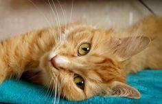 New free stock photo of animal pet eyes