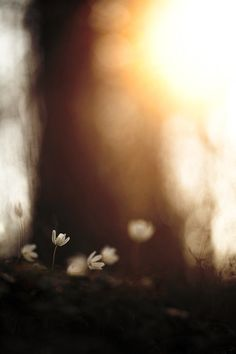 ☾ Midnight Dreams ☽ dreamy dramatic black and white photography - Black N White, Black White Photos, Black And White Photography, Robert Frank, Abstract Photography, Monochrome Photography, Light And Shadow, Bokeh, Light In The Dark