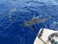 Sharks circling our boat 3 miles off the coast of Oahu!
