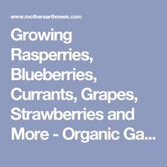 Growing Rasperries, Blueberries, Currants, Grapes, Strawberries and More - Organic Gardening - MOTHER EARTH NEWS