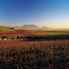 Durbanville winelands - Cape Town - table Mountain visible on the horison. Provinces Of South Africa, South Afrika, South African Wine, African Love, Wine Tourism, Table Mountain, Dream City, Most Beautiful Cities, Cape Town