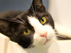 Oregon Humane Society - Adopt - Holden