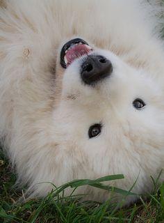 "Looks like a fluffy white teddy. :D I like the eyes. -- ""Silly Jackson By fliss1972 Felicity Tessier"""