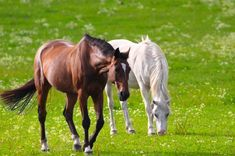 Brown White Horse Together On Beautiful Brown And White Horse, Brown Horse, Wildest Fantasy, Natural Instinct, Appaloosa, Beautiful Beautiful, Horses, Horse, Appaloosa Horses