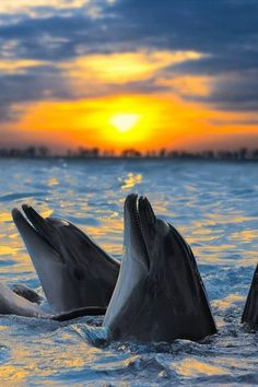 Dolphins at Sunset | Amazing Pictures #Amazing #photography