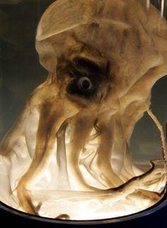 http://www.msn.com/es-pe/noticias/worldtrendtravel/21-criaturas-acuáticas-aterradoras/ss-BBmzugi?fullscreen=true