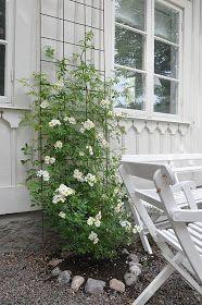 Again, a beautiful trellis and a viney plant. Always my fav. Again, a beautiful trellis and a viney Clematis Trellis, Rose Trellis, Garden Trellis, Farmhouse Garden, Garden Cottage, Pinterest Garden, White Gardens, My Secret Garden, Terrace Garden