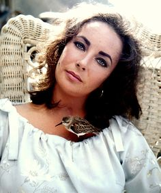 Elizabeth Taylor in the sandsipper with a perfect cute little bird on the top collet of her short Ivey blue somewhat floral be achy dress things.