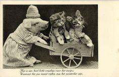 Photo Postcard CA 1940's