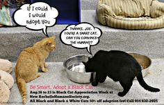 Black Cat Appreciation Day is Aug. 17. Adopt a lucky black cat.