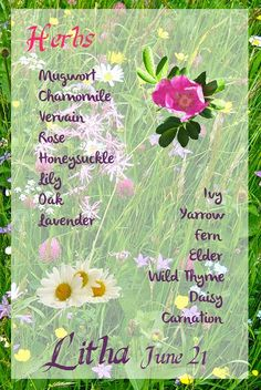 Herbs of Litha Summer Equinox, Summer Solstice, Wiccan, Magick, Midsummer's Eve, Pagan Festivals, Hedge Witch, Eclectic Witch, Traditional Witchcraft