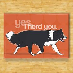 "This border Collie says ""yes, I herd you."" these herding dogs never miss an opportunity to herd you. Border Collie magnet is 2 by 3 Inch and comes nicely displayed in protective packagi… Border Collies, Border Collie Colors, Blue Heelers, Australian Shepherds, Rottweiler, Herding Dogs, Collie Dog, Collie Puppies, Golden Retriever"