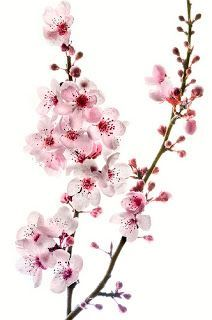 Would make an awesome tattoo, Watercolor cherry blossom maybe ... | I…