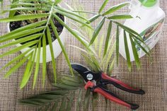 Special Care for Areca Indoor Palm Trees | eHow