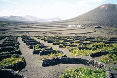Lanzarote, Spain: visited in 2011 Environmental Challenges, Permaculture Design, Spanish Wine, Water Collection, Farms Living, Down On The Farm, Canary Islands, Irrigation, Water Garden