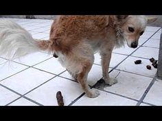Adiestramiento canino, como entrenar a tu perro para enseñarle a ir al baño - YouTube