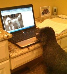 Writing Prompt: What is the brown dog thinking?