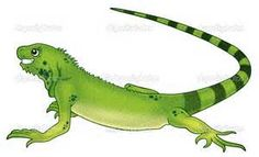 Image Search Results For Iguana Cartoon