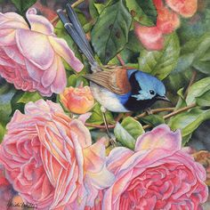 Wren and Roses is a sweet watercolour miniature using a palette of warm pinks and greens of the rose with a bright blue wren to complete the painting