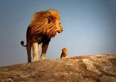 Todo lo que baña la luz es nuestro reino, Simba. The Lion King, Broadway, New York.