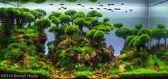 Here we have great photo about aquascaping contest. We wish these photos can be your the inspiratio. Aquascaping, Aquarium Design, Aquarium Ideas, Nano Cube, Fish Tank Design, Amazing Aquariums, Aquarium Landscape, Aquatic Plants, Planted Aquarium