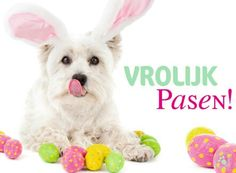 ♡ Easter Wishes, Happy Easter, Rabbit, Teddy Bear, Toys, Animals, Christian Dating, Dating Advice, Spring Time