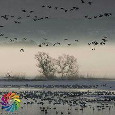 Instagram【bestjapanpics_】さんの写真をピンしています。 《👑TODAY'S bestjapanpics👑 . 🎌 CONGRATS to @tom_tom_brother 日本で撮られた素敵なお写真へのタグ付けありがとうございます🗻✨ . 📷 chosen by @indigo31jp(Mod) FOUNDER: @quelmarietto LOCALITY: 新潟県 CATEGORY: #白鳥#鳥#雪景色 . •follow us @bestjapanpics_ . •use #bestjapanpics . 撮影地の都道府県をキャプション・コメントタグ・ジオタグのいずれかに入れて下さい。 . @bestjapanpics_ では、日本で撮られた素敵なお写真へのタグ付けをお待ちしています✨ . Select the amazing photos every day. ダグ付けをして頂いた中から、毎日素晴らしい写真を選出させていただきます👑 . We'd appreciate a : • REPOST or SCREEN 📷…