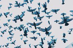 pigeon blues - Kyle