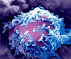 celula eucariotica - animal