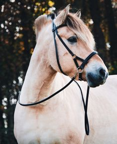 ⭐ Side Pull Pardoes Luxe😍 The newest bridle from Freedom Riding Articles. The PArdoes Luxe is made of the finest leather and black color with beige, orange, and orange padding🥰.. The bridle comes in the sizes mini up till Shire🙌. The bridle is included a continuous leather rein. Side Pull, Freedom, Black Leather, Articles, Horses, Beige, Orange, Luxury, Mini