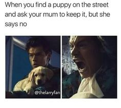 Dyinggggg harry styles memes, harry styles imagines, best song ever, one direction imagines Harry Styles Memes, Harry Styles Imagines, Best Song Ever, Best Songs, Funny Relatable Memes, Funny Posts, One Direction Imagines, Family Show, 1d And 5sos