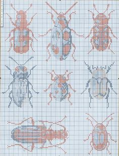 Beetle Collection 1 (2/8)