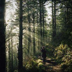 #trees #nature #sunlight