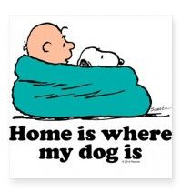 "Charlie Brown: Home is Where My Dog Is Square Sticker 3"" x 3"""