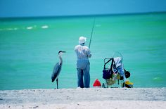 Caught this herring hoping the man fishing will share his catch. Navarre Beach Florida.