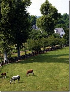 Gainesway Farm in Lexington, Ky. One of my favorite things to do on a Monday during the horse shows at the Kentucky Horse Park, is to go off-site and take a tour of the local Thoroughbred Farms. The variety of fencing and gates is remarkable.