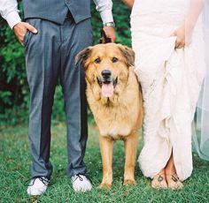Rustic Florida Wedding: Taylor + Michael - dog in wedding photo