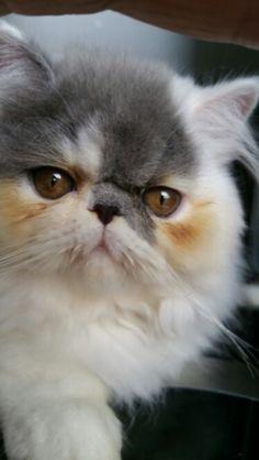Am I pretty?  Meow....  My beautiful kitten,  Fluffy.