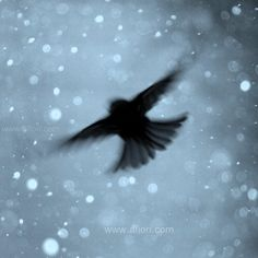 Snowflake Flight, little flying bird on cold, blue, sparkly winter sky