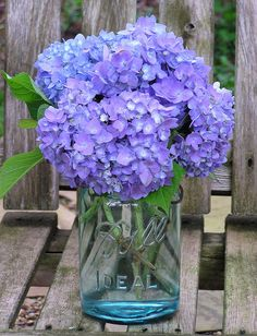 Ideas for wedding flowers hydrangea purple mason jars Purple Wedding Centerpieces, Wedding Vases, Wedding Flower Decorations, Flowers Decoration, Wedding Bouquets, Mason Jar Hydrangea, Purple Mason Jars, Henri Matisse, Bright Wedding Flowers