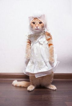 Omg! Adorable cat! My cat would never be that cool with being dressed up!