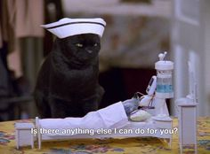 All images belong to cbs, paramount and Archie comics. My Spirit Animal, My Animal, Sabrina Cat, Salem Cat, Salem Saberhagen, Funny Cats, Funny Animals, Old Shows, I Love To Laugh