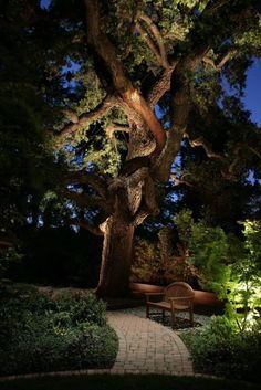 Lighting Up the Trees Uplighting trees can add drama to a night garden particularly when the tree has a striking form. Huge twisting branches seem alive when lit from within and below. - Outdoor Lighting - Ideas of Outdoor Lighting Landscape Lighting Design, Landscape Designs, Outdoor Lighting Landscape, Creative Landscape, Outdoor Landscaping, Outdoor Gardens, Landscaping Ideas, Outdoor Patios, Backyard Ideas