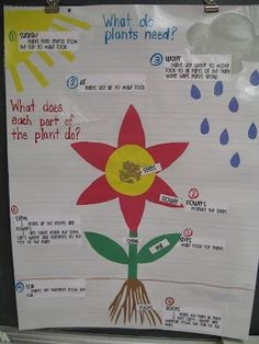What do plants need & parts of a plant anchor chart by dakota moone