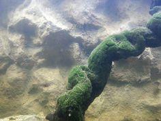 3d aquarium bacground slim ince akvaryum fonu 3d taş kaya görüntüsü