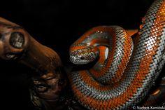 Snake by Norbert Kamiński on 500px